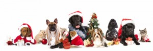 Holiday-Pets