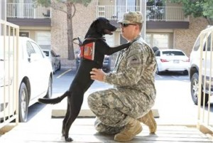 120503-ptsd-dogs-hilson-bcol-11a.380;380;7;70;0